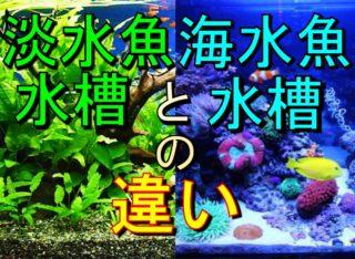 淡水魚水槽と海水魚水槽の違いとは?特徴とそれぞれの魅力を解説します!