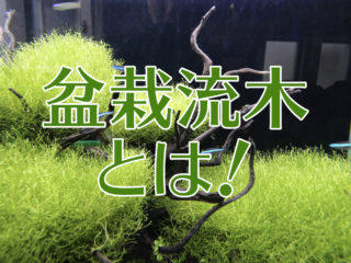 盆栽流木とは!モスと組み合わせて美しくレイアウトしたいおすすめ流木!