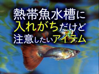 熱帯魚水槽に入れないで!入れがちだけど注意したいアイテム5つ!