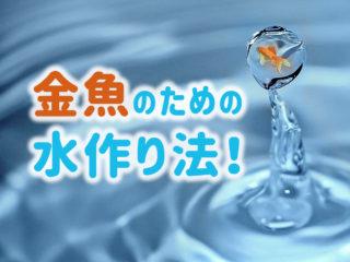 金魚のための水作り法!水道水を金魚向きの水質に調整するポイントとは!