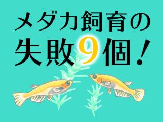 メダカ飼育の失敗9個!水合わせ・稚魚飼育などで初心者がやりがちなミス