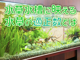 水草水槽に映える水草の適正数!おすすめ本数と種類を水槽サイズ別に解説