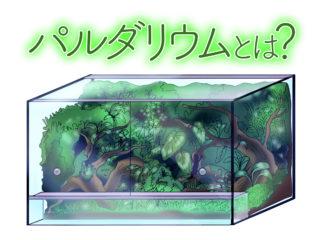 本格ブーム到来のパルダリウム水槽とは!熱帯植物水槽の魅力に迫ります!