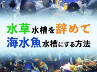 水草水槽をやめて海水魚水槽にしたい!水槽の仕様変更をする時の注意点!
