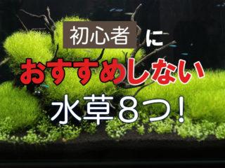 初心者におすすめしない水草8つ!レイアウト・育成など難しい点も解説!