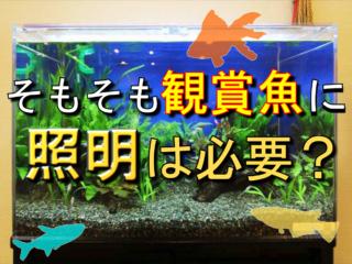 そもそも観賞魚に照明は必要?熱帯魚、金魚やメダカにライトが必要な理由