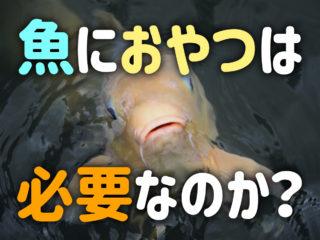 熱帯魚・観賞魚におやつは必要?魚に主食以外の餌を与えるメリットとは!