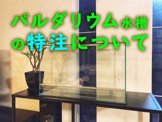 パルダリウム水槽を作ろう!熱帯植物水槽なら専門店への特注がおすすめ!