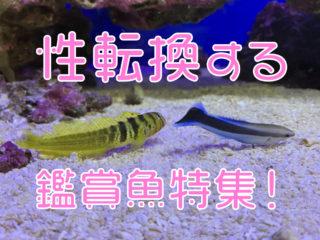 性転換する魚?!オス・メスが変化する観賞魚5種!飼育できる種類を紹介