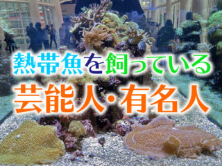 熱帯魚を飼っている芸能人・有名人を紹介!個々のアクアリウムをプロが解説!