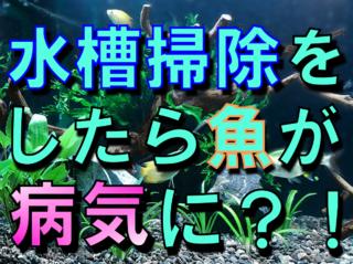 水槽掃除をしたら魚が病気になった?!水カビ病などを防ぐ掃除方法とは