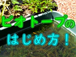 ビオトープのはじめ方!作り方やおすすめの魚・水草・場所を解説します!