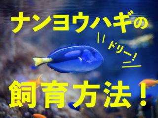 海の人気者!ナンヨウハギ(ドリー)の飼育方法!どんな水槽で飼育可能?