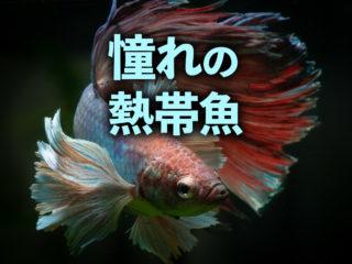 憧れの熱帯魚特集!プロアクアリストが一度は飼育したい美しい熱帯魚10選