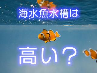 海水魚水槽は高い?お得に本格海水水槽を立ち上げる方法と使いたい設備とは