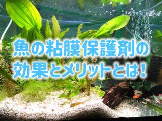 魚の粘膜保護の効果・メリットとは!おすすめの餌・保護剤などをご紹介!