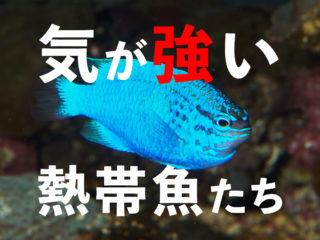 気が強い魚7種!混泳・複数飼育に注意したい熱帯魚・観賞魚たちを紹介!