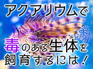 【触れたらダメ!】毒がある海の生物を水槽で飼育するための注意点とは?