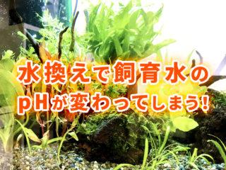 水換えで飼育水槽のpHが変わってしまう!熱帯魚が快適に過ごせる対策とは