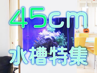 45cm水槽特集!最適な熱帯魚の数から機材をご紹介!水量も豊富です!