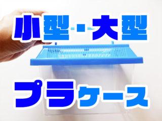 手軽に使える小型・大型のプラケース水槽10選!採取や隔離にもおすすめ