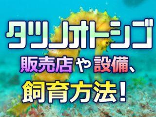 海水魚初心者にタツノオトシゴ飼育は難しい?販売店や設備、飼育方法とは!