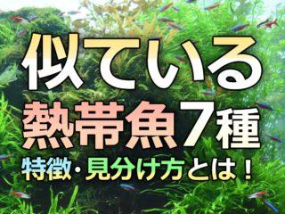 似ている熱帯魚・観賞魚7種!そっくりだけど違う種類!見分け方とは!