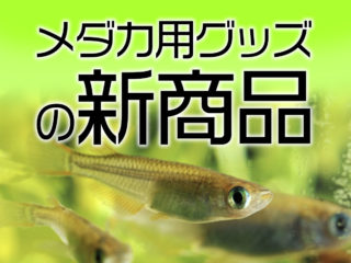 メダカの新商品特集!メダカ飼育におすすめの最新飼育用品ベスト10!