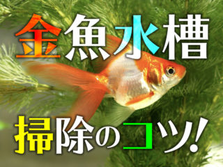 金魚水槽の掃除方法!フィルターや砂利など、清潔な水槽で病気を防ごう!