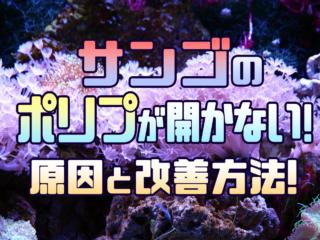 サンゴのポリプが開かない!原因と改善方法!サンゴをイキイキさせよう