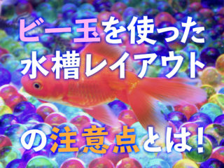 夏のアクアリウム!ビー玉を使って金魚やメダカ水槽をレイアウトしよう!