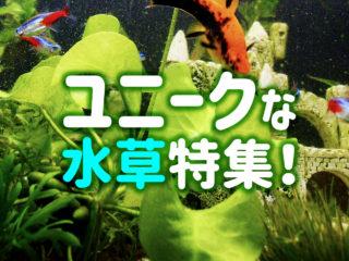 ユニークな水草8選!丸い・色が美しい・形がおもしろい水草を特集です!