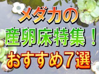 メダカの産卵床特集!おすすめの産卵水草・人工産卵床7選と特徴を解説!