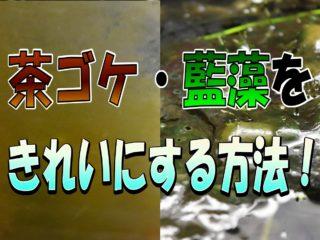 茶コケ・藍藻をきれいにする方法!茶コケから気泡がでる?!防止策も!