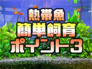 【超初心者向け】簡単に熱帯魚を飼育するための基本ポイント3つを解説!