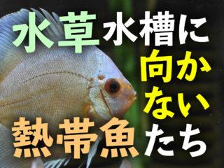 導入に注意!水草水槽に向かない熱帯魚6選!水草と相性の悪い魚種とは?