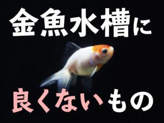 金魚水槽に入れてはいけないもの・生き物6種!長く安全に飼育するために