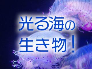 光る海の生き物5種!ウミホタル、夜光虫など幻想的な癒しの生き物たち!