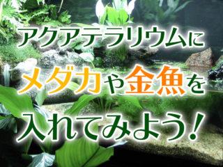 アクアテラリウムにメダカや金魚を入れよう!レイアウトと飼育方法とは