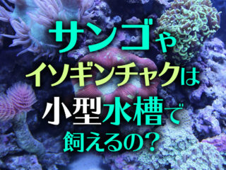 小型水槽でサンゴ・イソギンチャク飼育は可能?おすすめ種類と飼育のコツ