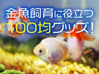 100均グッズで金魚飼育のコストを抑えよう!飼育に役立つアイテム8選!