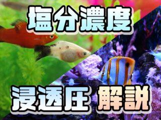 淡水魚、海水魚、どうしてその水じゃないと生きられないの?浸透圧を解説!