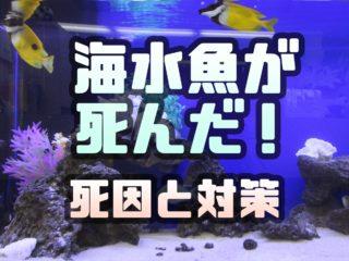 海水魚が死んだ!海水水槽でよくある死因5個とその対策をまとめました!