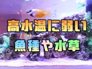夏の暑さに注意!高水温に弱い魚種や水草とは!28度以上で要注意な生体!