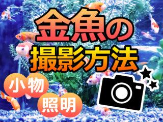 金魚の撮り方!SNS映えする撮影方法!効果的な小物や照明を考えてみた!