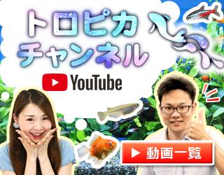 トロピカ@東京アクアガーデンの公式Youtubeチャンネル!素敵なアクアリウム動画をお届けします
