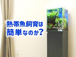 熱帯魚飼育は簡単なのか?熱帯魚の死因と長期飼育するためのポイントとは