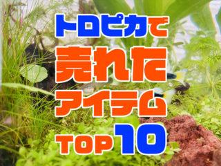 トロピカから売れた商品ベスト10!アイテム!おすすめ人気の商品とは