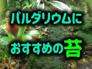 【パルダリウム制作に必須】パルダリウム水槽を美しく彩るおすすめの苔!