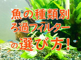 魚の種類別!ろ過フィルターの選び方!小型魚・メダカ・金魚・肉食魚向け